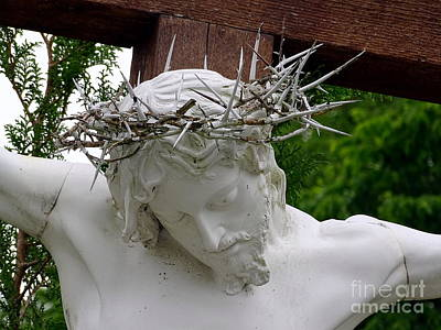Photograph - Christ's Crown Of Thorns by Ed Weidman