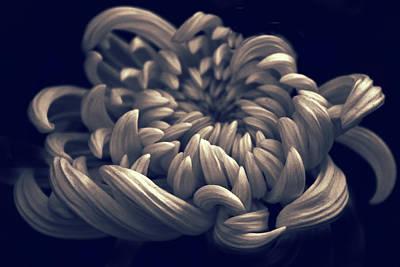 Photograph - Chrysanthemum Curves by Jessica Jenney