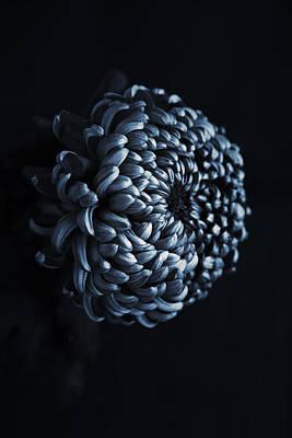 Photograph - Chrysanthemum by Fine Arts