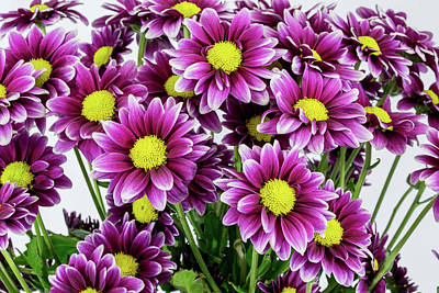 Photograph - Chrysanthemum Grouping by Greg Thiemeyer
