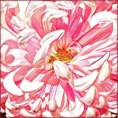 Chrysanthemum In Pink Print by Shadia Derbyshire