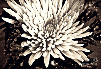 Photograph - Chrysanthemum In Sepia 2  by Sarah Loft