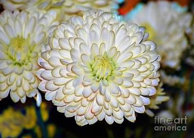 Photograph - Chrysanthemum Ion by Patti Whitten