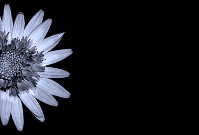 Flower Photograph - Chrysanthemum On Black by Mark Rogan