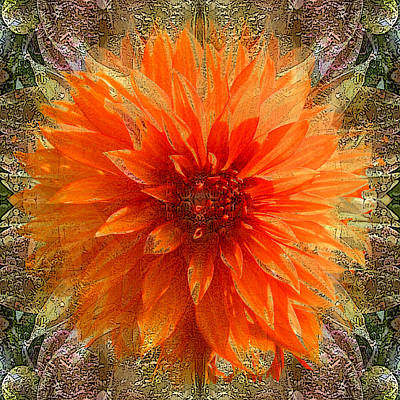Photograph - Chrysanthemum by Tom Romeo