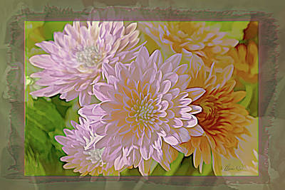 Photograph - Chrysanthemums by Bonnie Willis