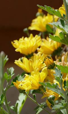 Photograph - Chrysanthemums by Laurel Powell