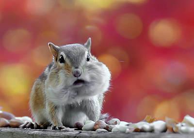 Photograph - Chubby Cheeks by Geraldine Alexander