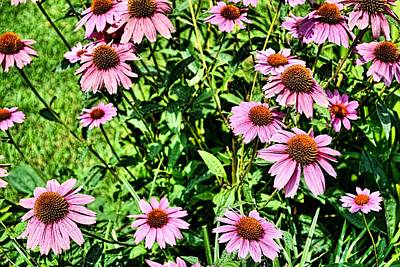 Photograph - Chubby Daisies by JAMART Photography