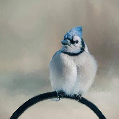 Photograph - Chubby Jay by Cathy Kovarik