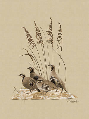 Digital Art - Chukar Partridges by IM Spadecaller