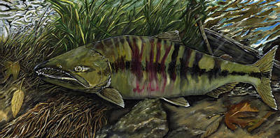 Painting - Chum Salmon by Sara Stevenson