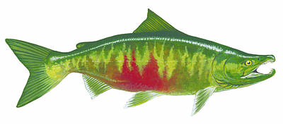 Painting - Chum Salmon by Shari Erickson