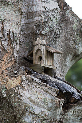 Photograph - Church Tree House by Ella Kaye Dickey
