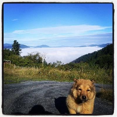 Chuvak And The Cloudy Sea #dog #animal Art Print