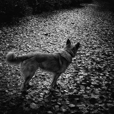 Dogs Wall Art - Photograph - Chuvak  #dog #dogslover #animal #pet by Rafa Rivas