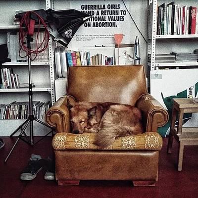 Pets Wall Art - Photograph - Chuvak  #dogsofinstagram #dog #animal by Rafa Rivas