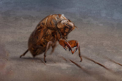 Bug Photograph - Cicada Shell by Tom Mc Nemar