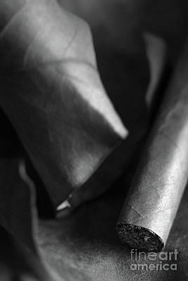 Photograph - Cigar #8581 by Andrey Godyaykin