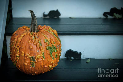 Photograph - Cinderella Pumpkin by Dale Powell