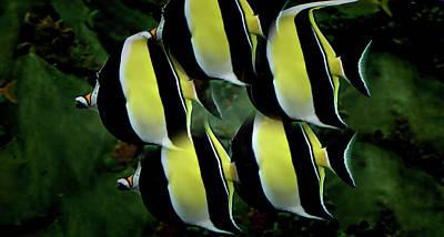 Angel Fish Photograph - Circle Of Angels by Douglas Barnard