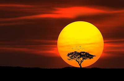 Circle Of Life Print by Bess Hamiti