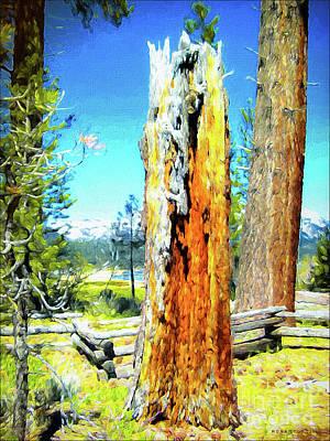 Circle Of Life Tree Trunk Art Print by Mona Stut