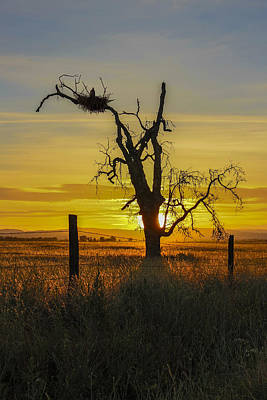 Jimerson Photograph - Circle Of Life by Wes Jimerson
