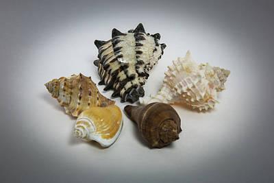 Photograph - Circle Of Seashells by Greg Thiemeyer