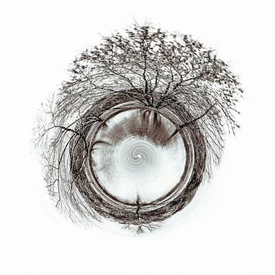 Photograph - Circle Of Trees by Wade Brooks