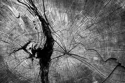Photograph - Circles Of A Cut Tree Trunk by John Williams