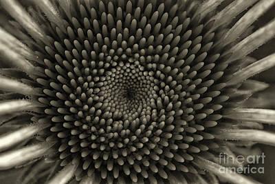 Photograph - Circles Of Life Monochrome by Karen Adams