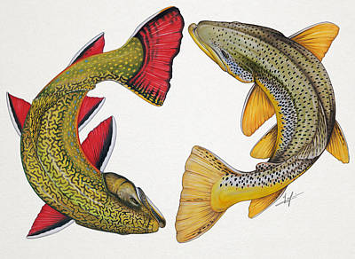 Trout Drawing - Circling Brook And Brown Trout by Nick Laferriere