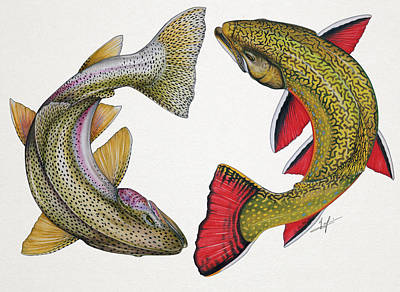 Trout Drawing - Circling Rainbow And Brook Trout by Nick Laferriere