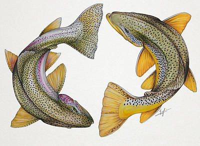 Trout Drawing - Circling Rainbow And Brown Trout by Nick Laferriere
