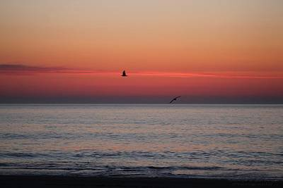 Photograph - Circling Seagulls At Sunrise by Robert Banach