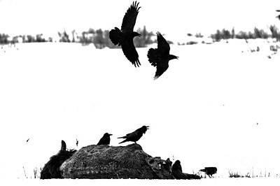 Photograph - Circling The Carcass Black And White by Adam Jewell