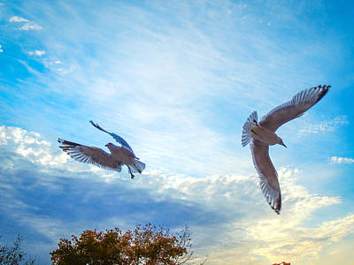 Photograph - Circling Wings  by Glenn Feron
