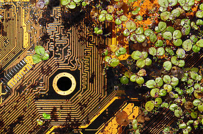 Photograph - Circuit Sprouts by Stephen Dorsett