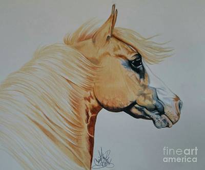 Drawing - Palomino Paint - Cisco by Cheryl Poland
