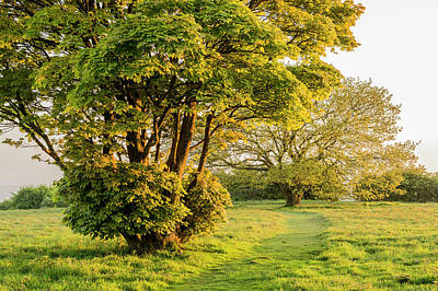 Photograph - Cissbury Spring Green by Hazy Apple