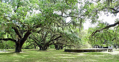 Photograph - Cistern Under The Oaks by D Hackett