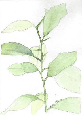 Painting - Citrus Sapling by Rachel Osteyee