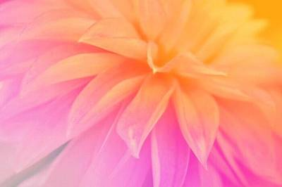 Aloha For Days - Citrus Scent of Dahlia by The Art Of Marilyn Ridoutt-Greene