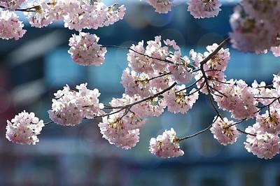 Photograph - City Blossoms by Fraida Gutovich