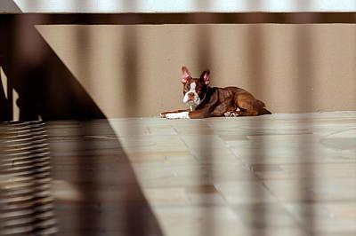 Photograph - City Dog by Jonathan Nguyen