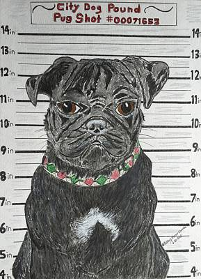 Painting - City Dog Pound Pug Shot by Kathy Marrs Chandler