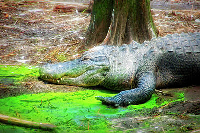 Photograph - City Flare Alligator by Aimee L Maher Photography and Art Visit ALMGallerydotcom