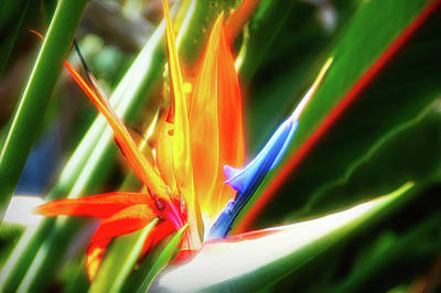 Photograph - City Flare Bird Of Paradise by Aimee L Maher Photography and Art Visit ALMGallerydotcom