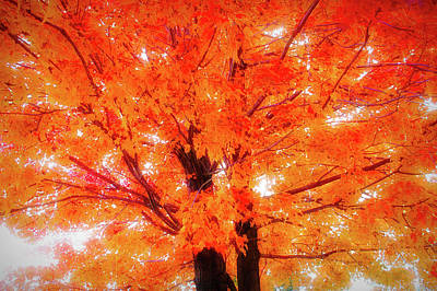 Photograph - City Flare Golden Tree by Aimee L Maher Photography and Art Visit ALMGallerydotcom